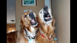Best of Dogs  Awesome Dogs Singing (Full) [Funny Pets]