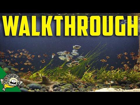 My 800 Gallon Aquarium Walkthrough