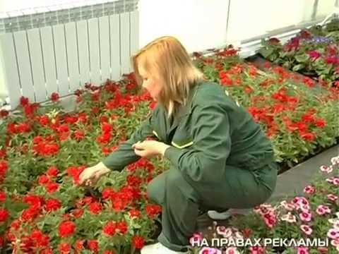 РЕН-ТВ-Астрахань (весна-2013)