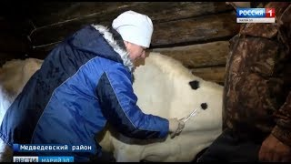 Ветеринары Марий Эл проводят весенний осмотр сельскохозяйственных животных