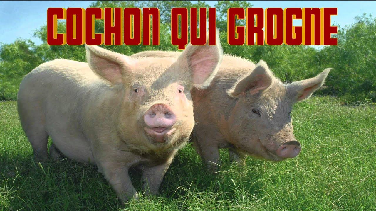 cochon qui grogne cri du cochon verso del maiale pig sound youtube. Black Bedroom Furniture Sets. Home Design Ideas