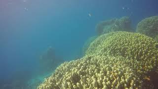 7 Sisters Snorkeling & Diving site