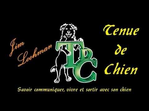 Tenue de Chien Education canine éthologique et relationnelle