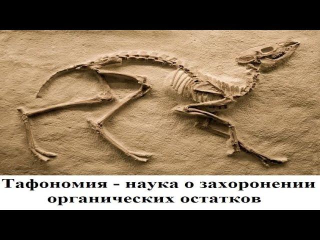 Тафономия - наука о захоронении органических остатков