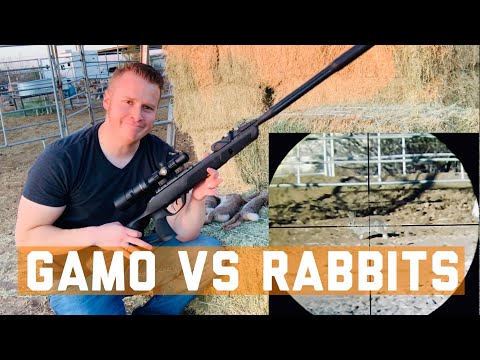 GAMO Swarm Fusion Airgun Rabbit Sniping: Can I Hunt With This GAMO Airgun? (Tim Wells Hunt Spoof)