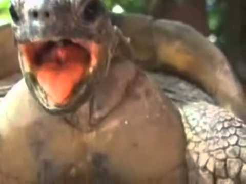 Turtle Can't Wait (Turtle Mating Nu Shooz Remix) mp3