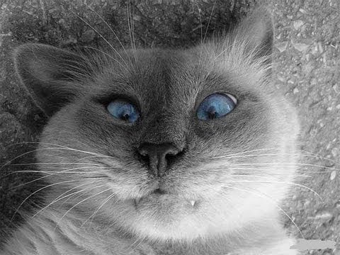 Смешное видео про животных – смотреть видео онлайн в Моем
