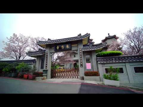 臺北陽明山 東 方 寺-(3/31)小小綠繡眼+櫻花花開7成(JEFF 4K video) Cherry blossoms TAIWAN#jeff0007 - YouTube