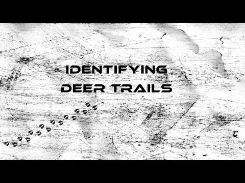 How To: Find Deer Trails
