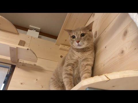 シャーと威嚇なくなった猫