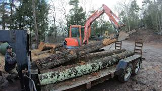 Getting logs ready for the sawmill