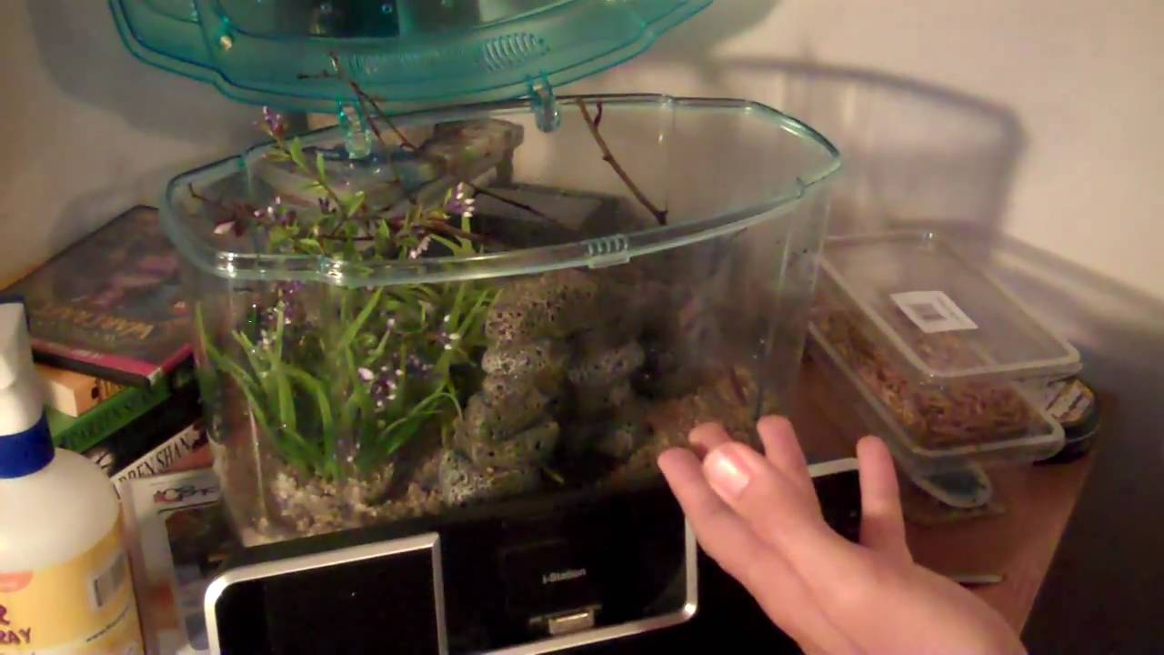 How to Keep a Pet Praying Mantis Without a Cage pics