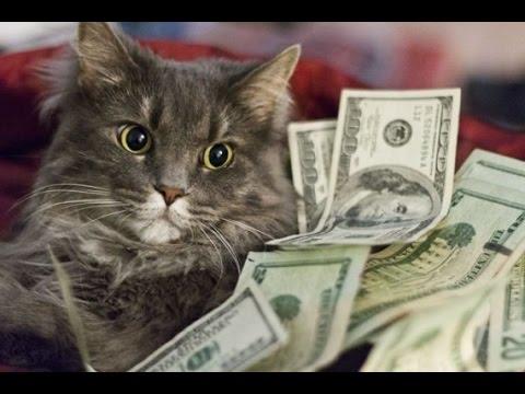 Фото кота с деньгами