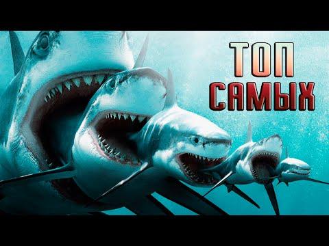 Топ 10 САМЫХ больших акул