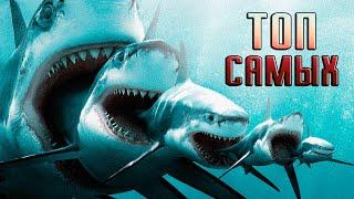 Топ 10 САМЫХ больших акул(Я подобрал для вас 10 самых больших акул. В конце вас ждет место гран-при) Я ВК: http://vk.com/vlad205 Паблик ВК: http://vk.com/to..., 2015-08-13T18:09:19.000Z)