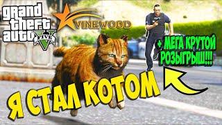 GTA 5 RP Кошачий беспредел ЧАСТЬ 1 Я СТАЛ КОТОМ Приколы про котов GTA 5 RP Vinewood