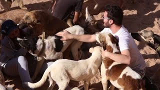 Shelter lends helping paw to animal victims of Syria war