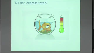 Fish health and immunology: lessons from infectious agents thumbnail