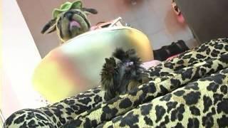 Все О Домашних Животных: Места Для Гламурных Fashion Собачек