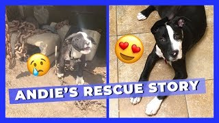Andie's Rescue Story: From Heavy Chains to Couch Cuddles