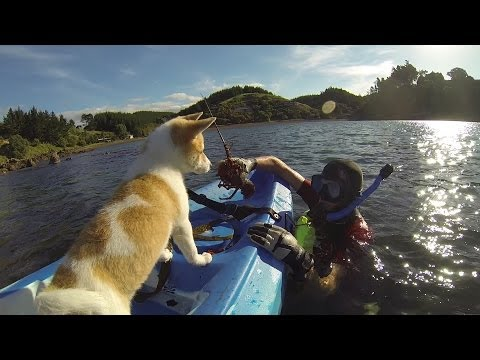 Lulu the Shiba Inu - first Kayak!