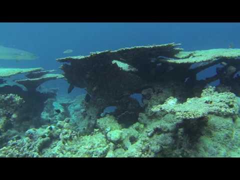 snorkeling THULHAGIRI ISLAND RESORT maldives
