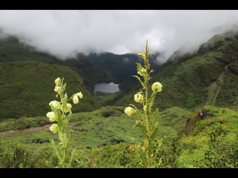 Bhutan Flower Tour - In Search Of The Yellow And Blue Poppies Of Bhutan