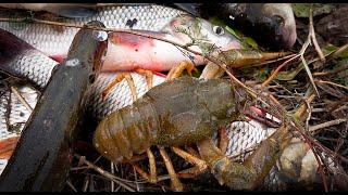 Коротко о рыбалке в Октябре Река Куланотпес Щука сети