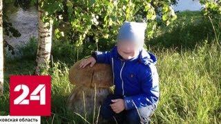 Убийство по неосторожности: в Подмосковье возбудили дело после гибели 5-летнего мальчика - Россия 24
