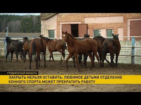 Школа конного спорта под Гродно на грани закрытия: сумеют ли найти на нее деньги?