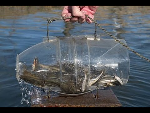 how to make a fish trap in 30 seconds youtube