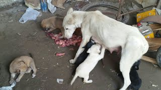 Feeding Stray Dogs During Lockdown #WithMe  - Feeding Hungry Puppies || Feeding Hungry Stray Animals