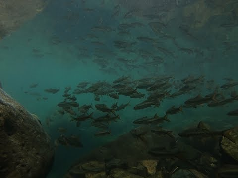 Destination Meghalaya | Living Roots Bridge