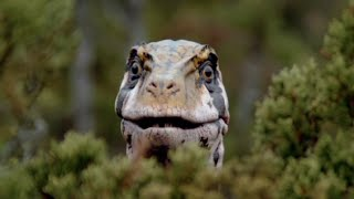 The Scientific Accuracy of Walking With Dinosaurs - Episode 4: Giant of the Skies