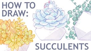 "How to draw succulent ""Echeveria Lauii"" 