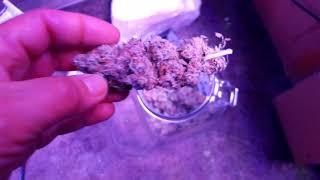 higrow-600-watt-indoor-scrog-grow-part-2