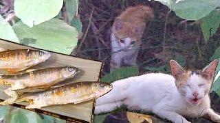 オイカワを釣って食う 塩焼き River fishing Catch & Eat