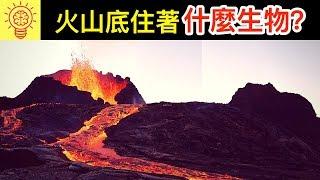 科學家震驚發現!【火山裡住著】的神秘生物 !?