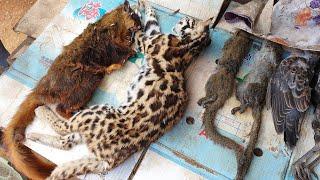 ร้านขายของป่า เสือไฟ ไก่ป่า บ่างเหลือง  เสียดายซอยชีวิตกระรอกบ่ทัน ที่เชียงขวาง สปป.ลาว