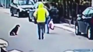 Stray dog saves innocent woman from robber