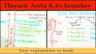 Thoracic Aorta - Branches- Anatomy - Easily explained - Hindi