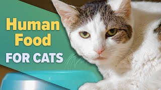 Are Human Foods Bad For Cats?