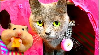Кошка знакомится с мышкой! Съест или нет? КОШКА приняла ХОМЯКА за КОТЕНКА! Видео Про кошек