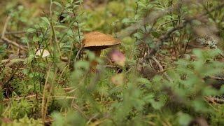 Еда живая и мёртвая, грибной спецвыпуск