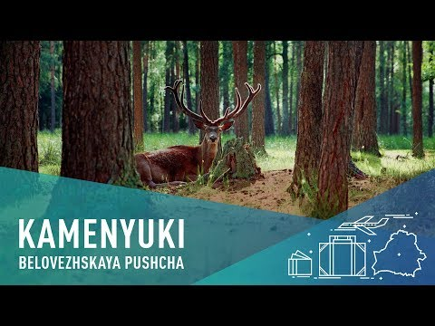 Travel To Belarus And Stay In Bialowieza Forest With Bisons!