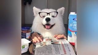 asmr-dog-having-breakfast-i-mayasmr