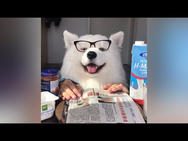 ASMR Dog Having Breakfast I MAYASMR