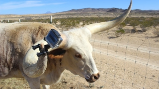 the horn cam