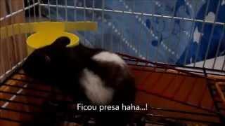 Como fazer um bebedouro para hamster