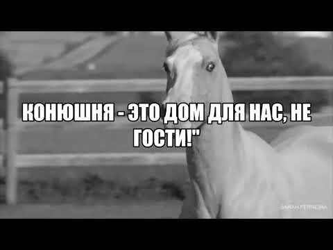 Конный спорт | А мой смысл жизни - это конный спорт